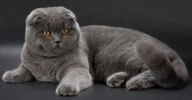 5 حقیقتی که در مورد گربه ها نمیداستیم!