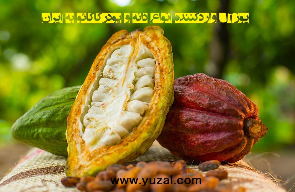 دانه کاکائو آفریقایی